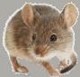 שיטות הדברת עכברים יעילות